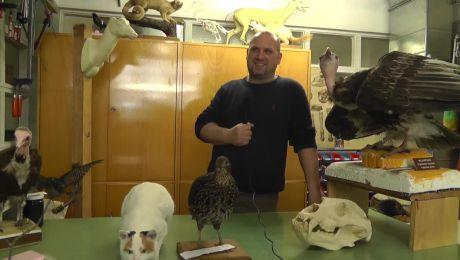 Robert Illek Video Thumbnail