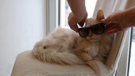 Sansibar die Katze